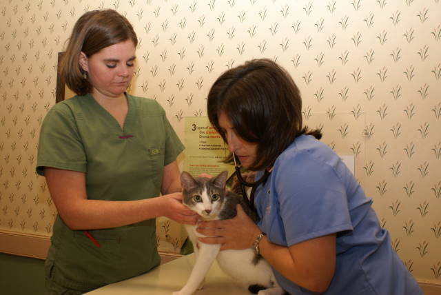Olde Towne Vet Clinic | Downtown Charleston, SC