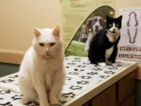 olde towne veterinary clinic dr kelli klein charleston.jpg