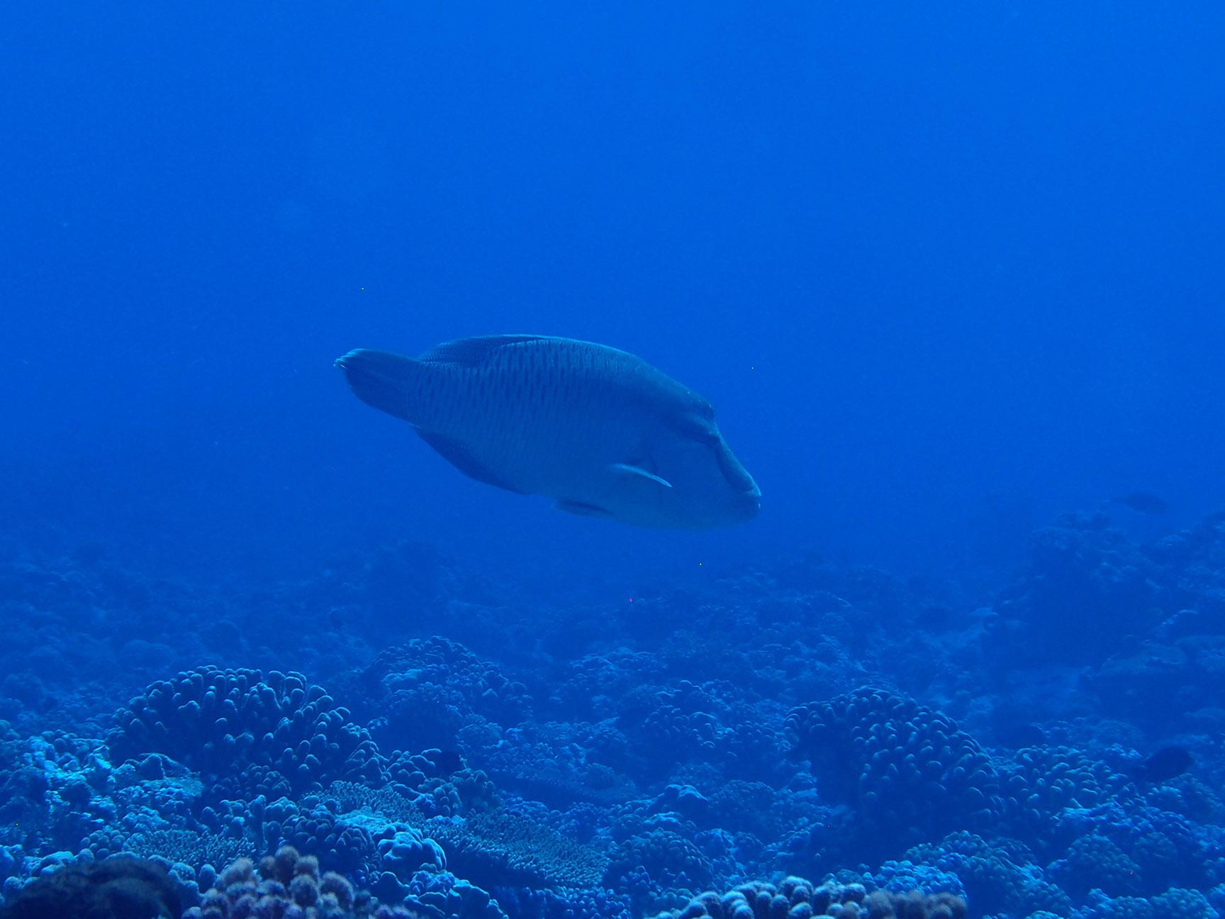 © Te Mana Travels — Fish in the lagoon