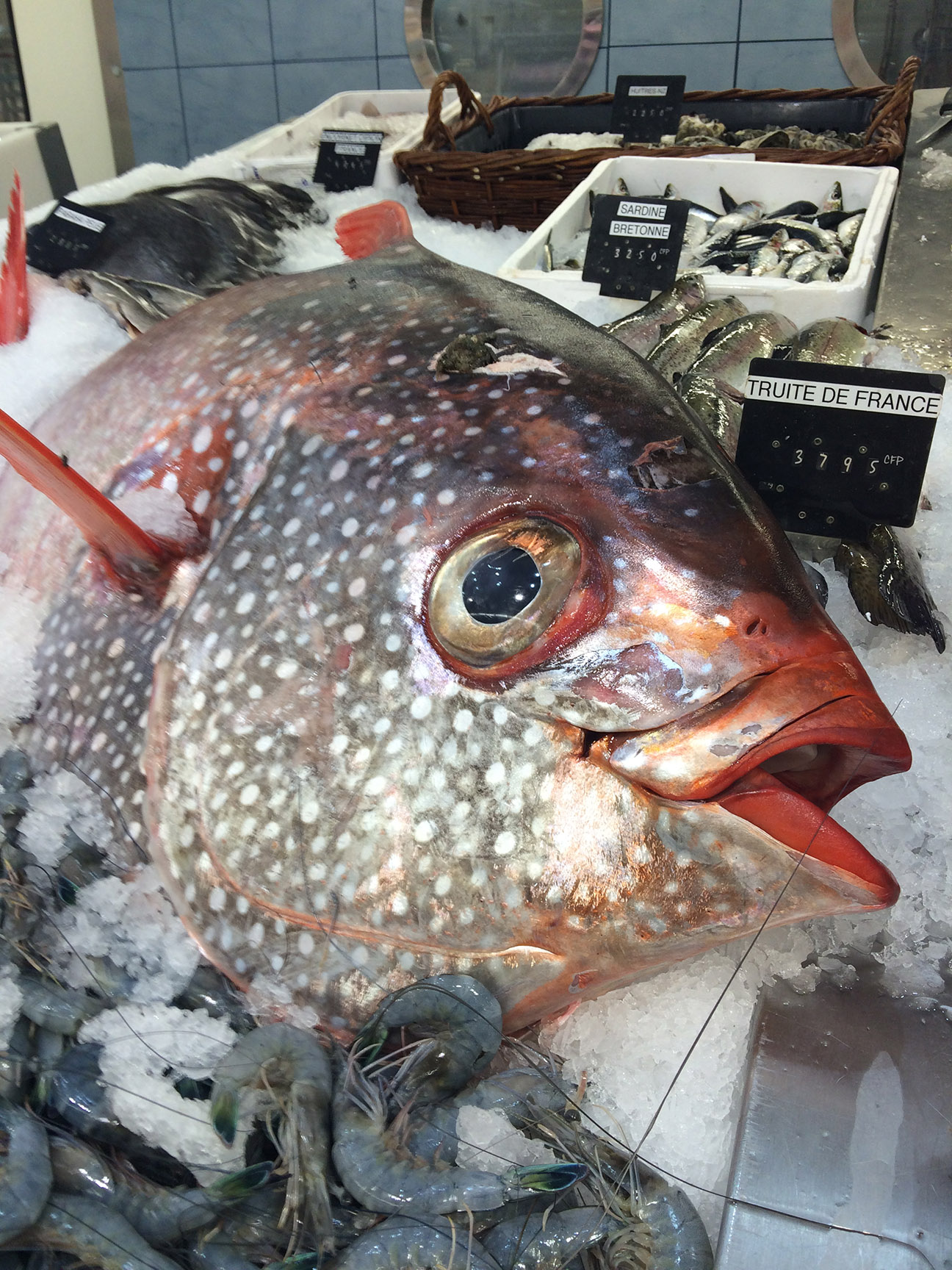 © Te Mana Travels — Fresh catch