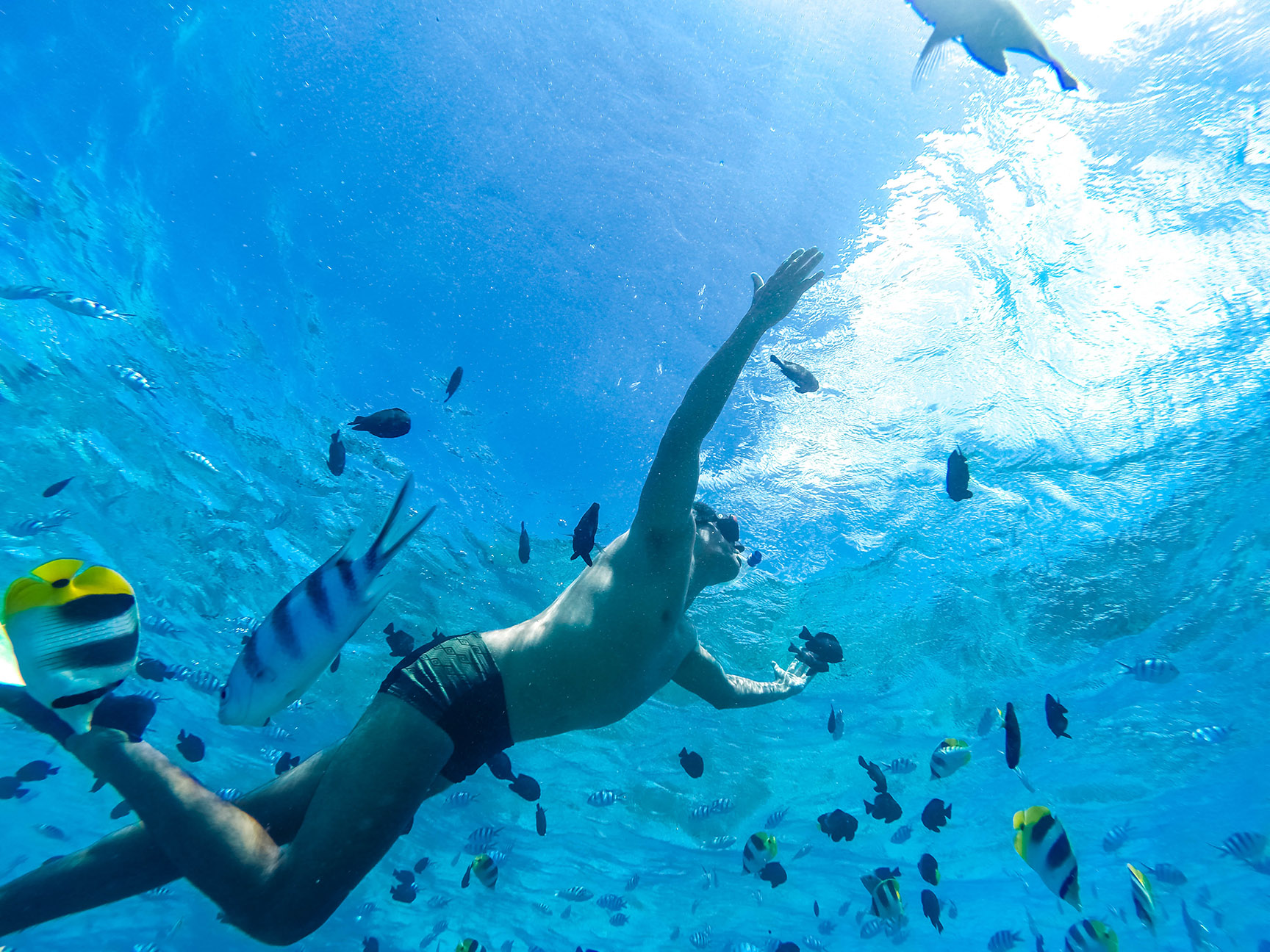 © Te Mana Travels — Swimming with the fish