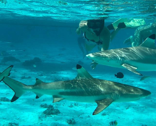 Shark pic.jpg