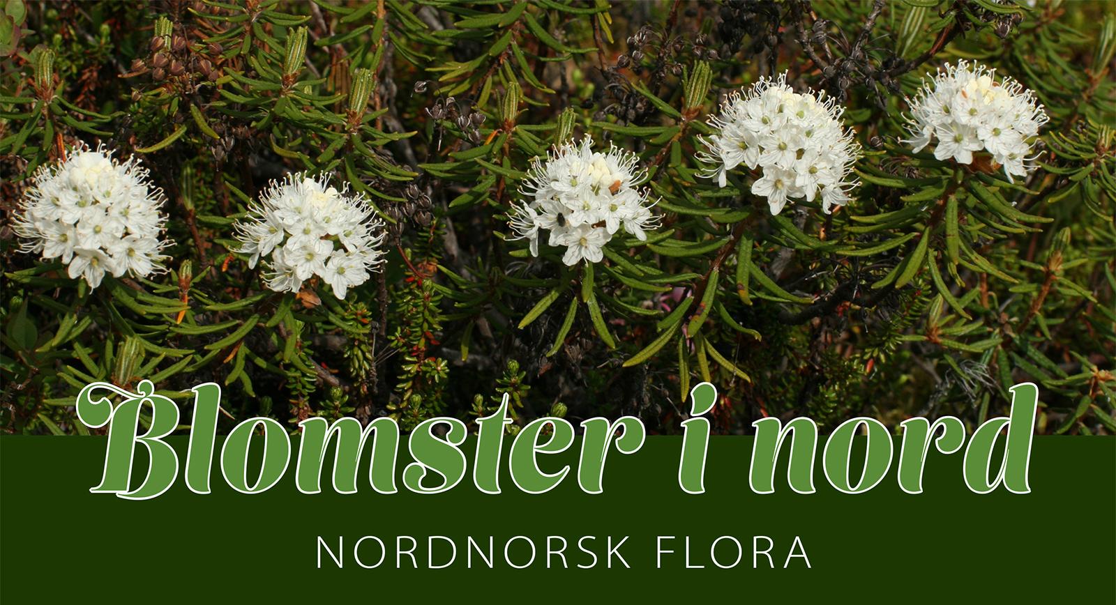 Blomsterinord - webplakat_2.jpg
