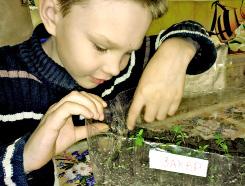 little_boy_plants.jpg