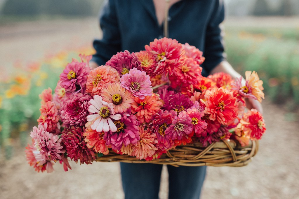 Farmer Florist  - We grow beautiful seasonal flowers & provide floral design services including: Weddings, Bridal/Baby Showers, Large installments & more. See photos of our work below