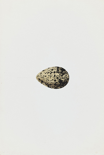 French, 19th century,  Study of an Egg,  watercolor on paper, 9 x 6""