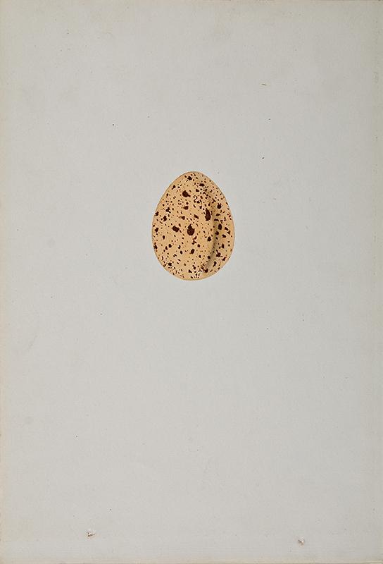Egg_30 copy.jpg