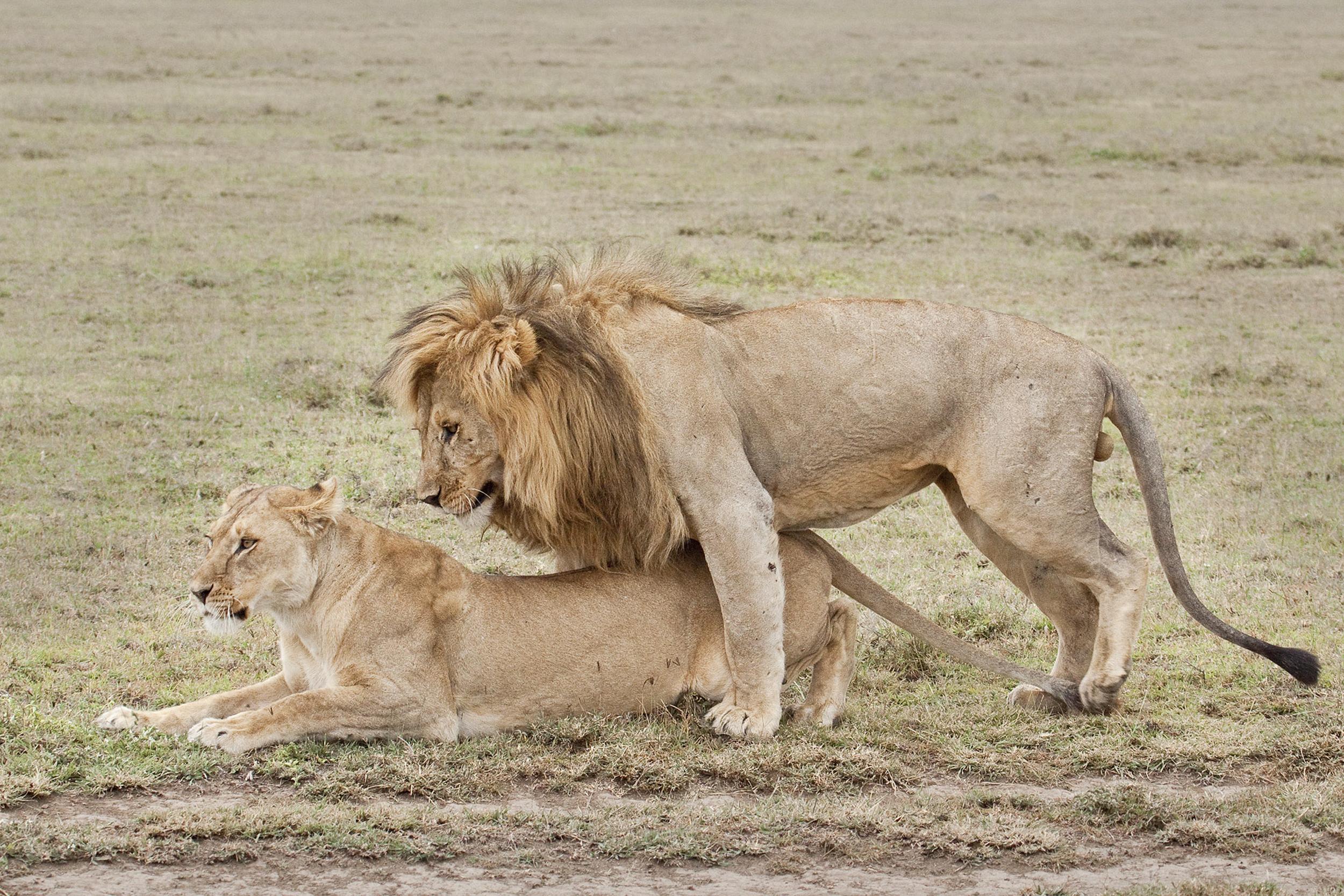 Mating Pair1.jpg