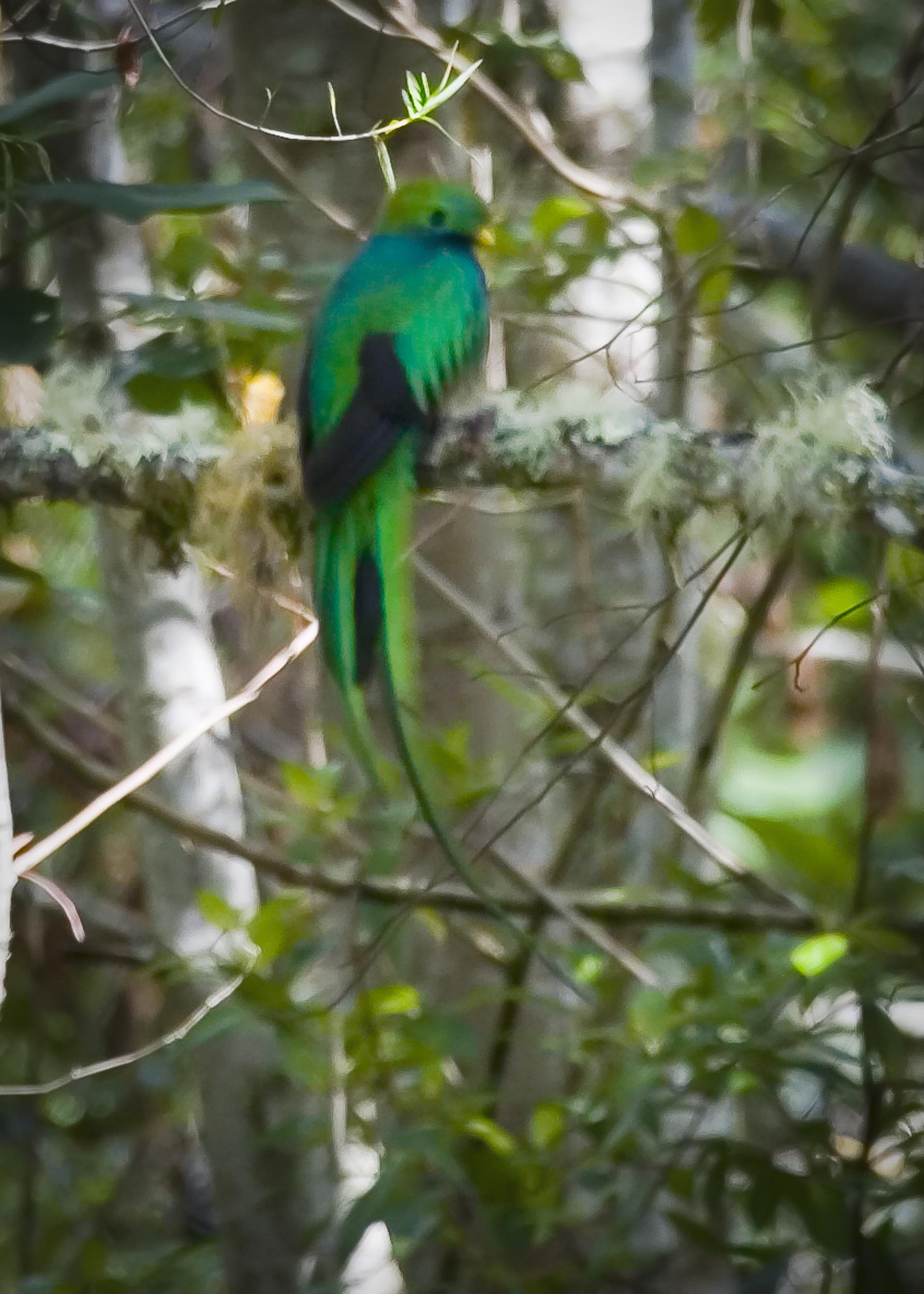 Quetzal 1-RP-WF 5x7.jpg
