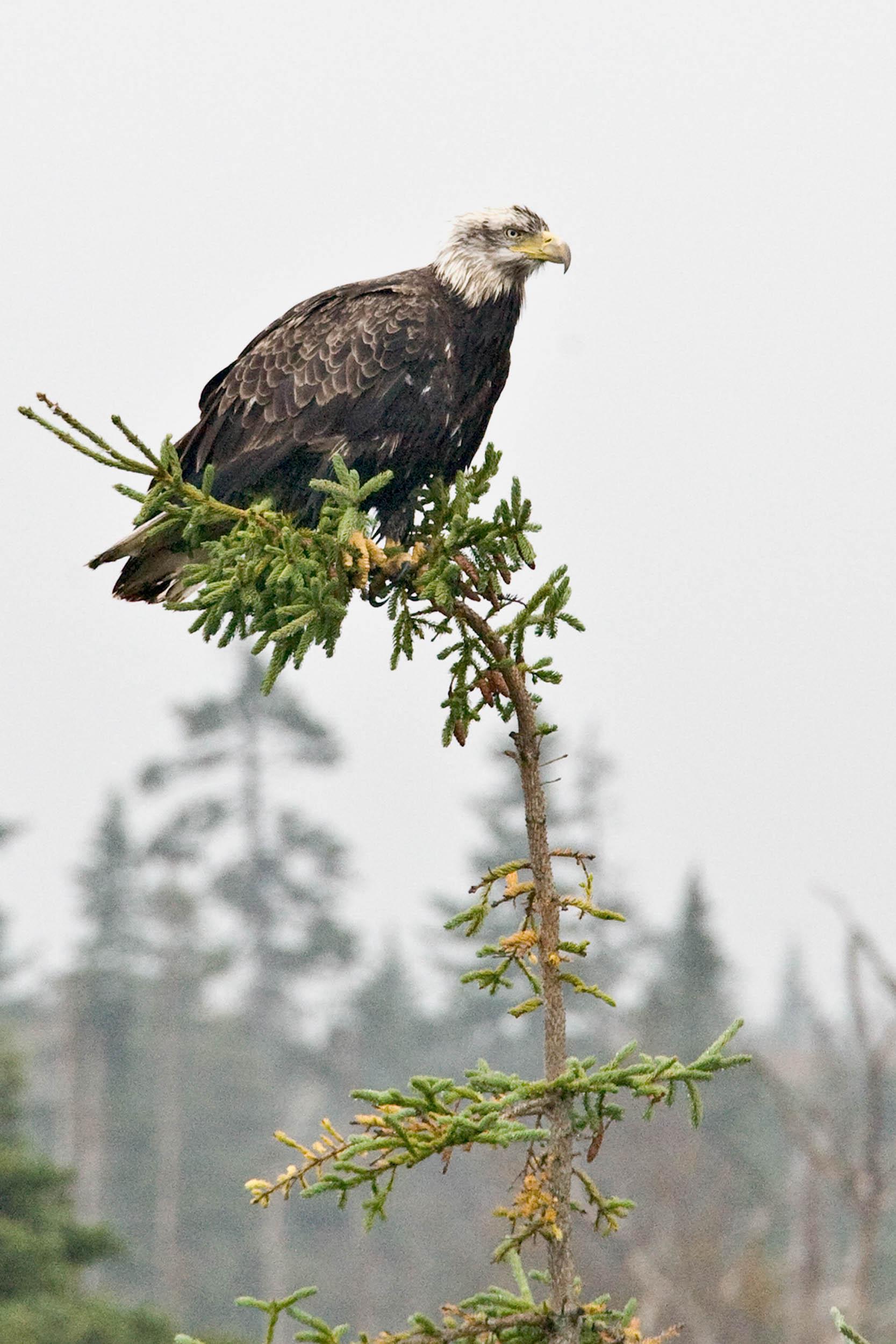 North Mountain09._Eagle1_PRWF.jpg