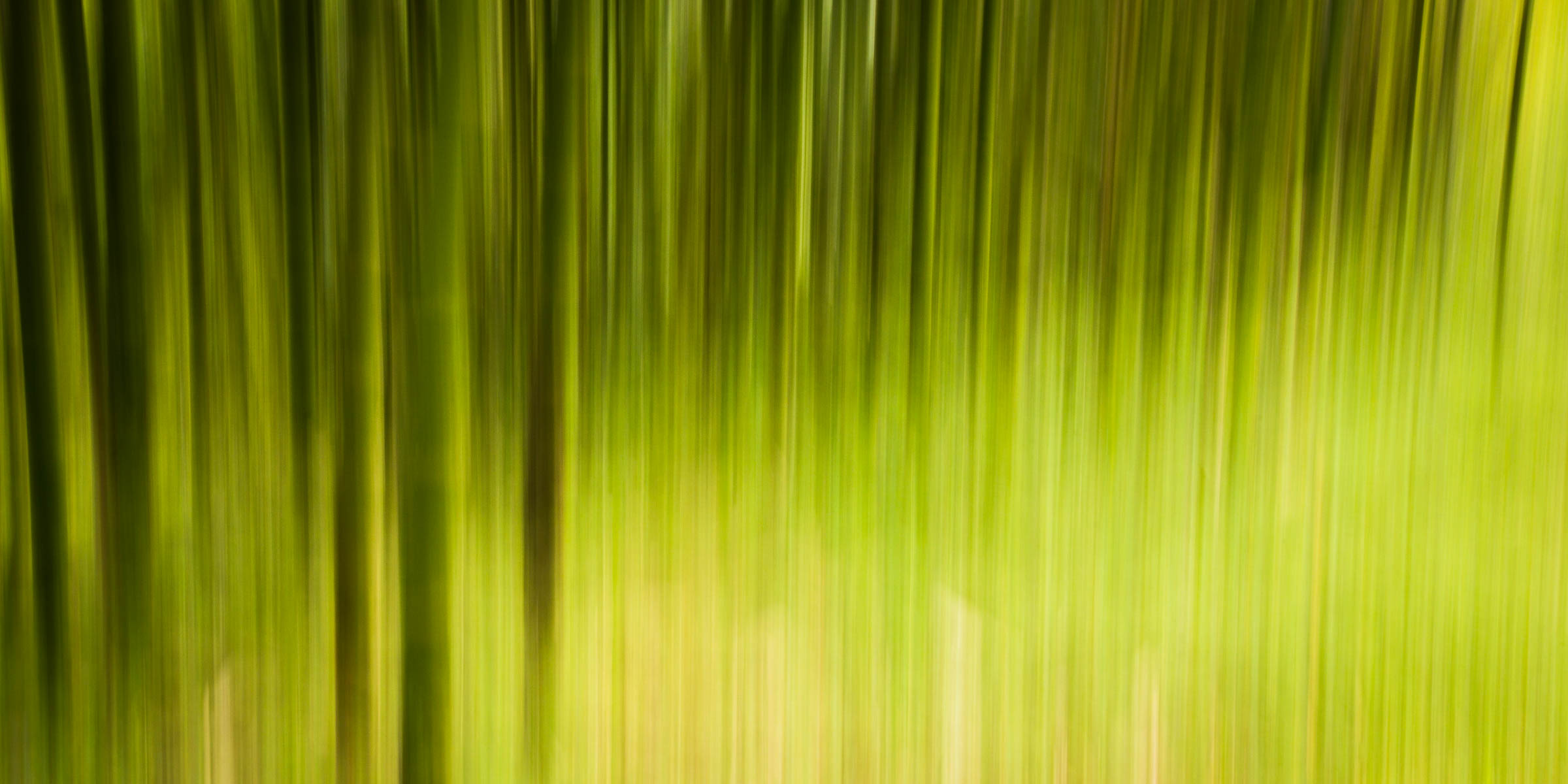 _MGL8950_Bamboo in the Mist.jpg