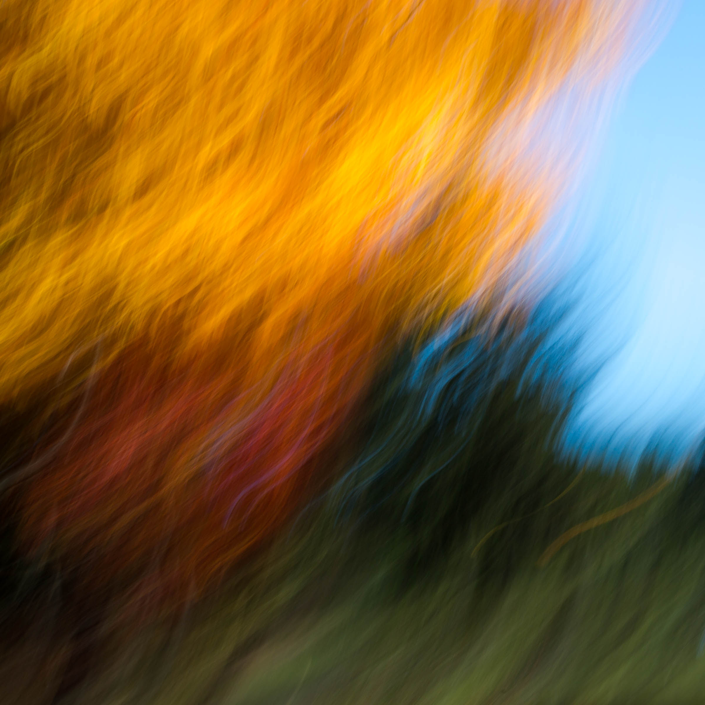 _MGL7029_Woodlands Diptych #2.jpg