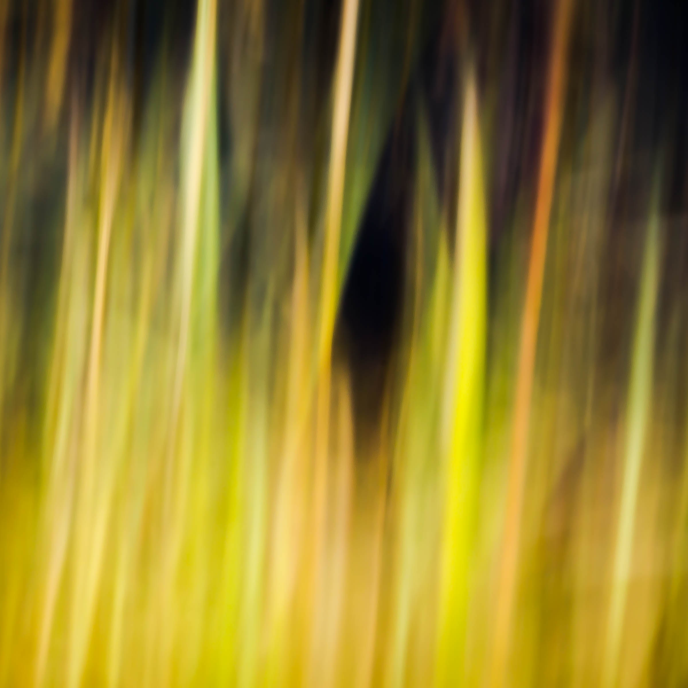 _MGL6191_On the Forest Edge.jpg