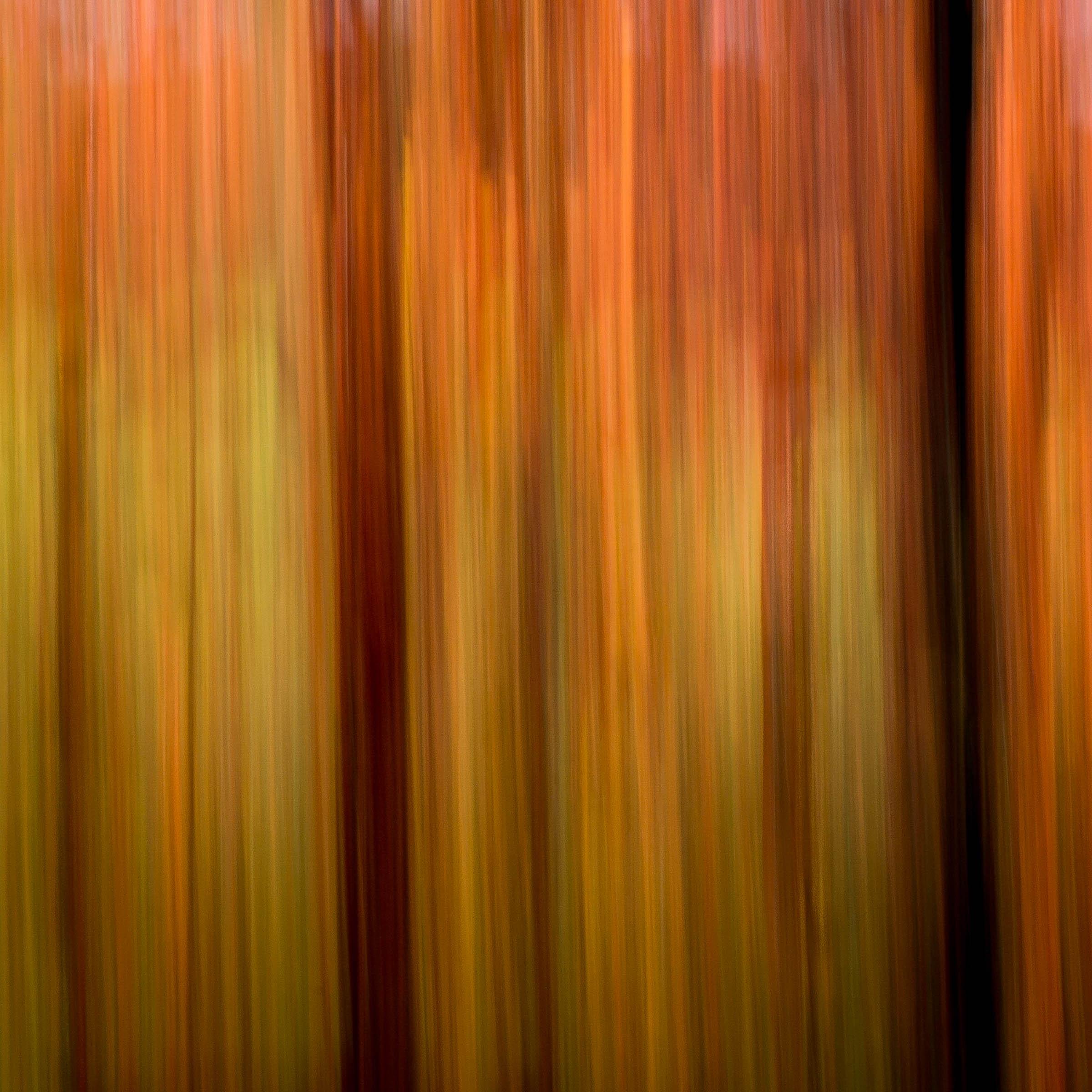 _MGL6943_Forest Afire.jpg