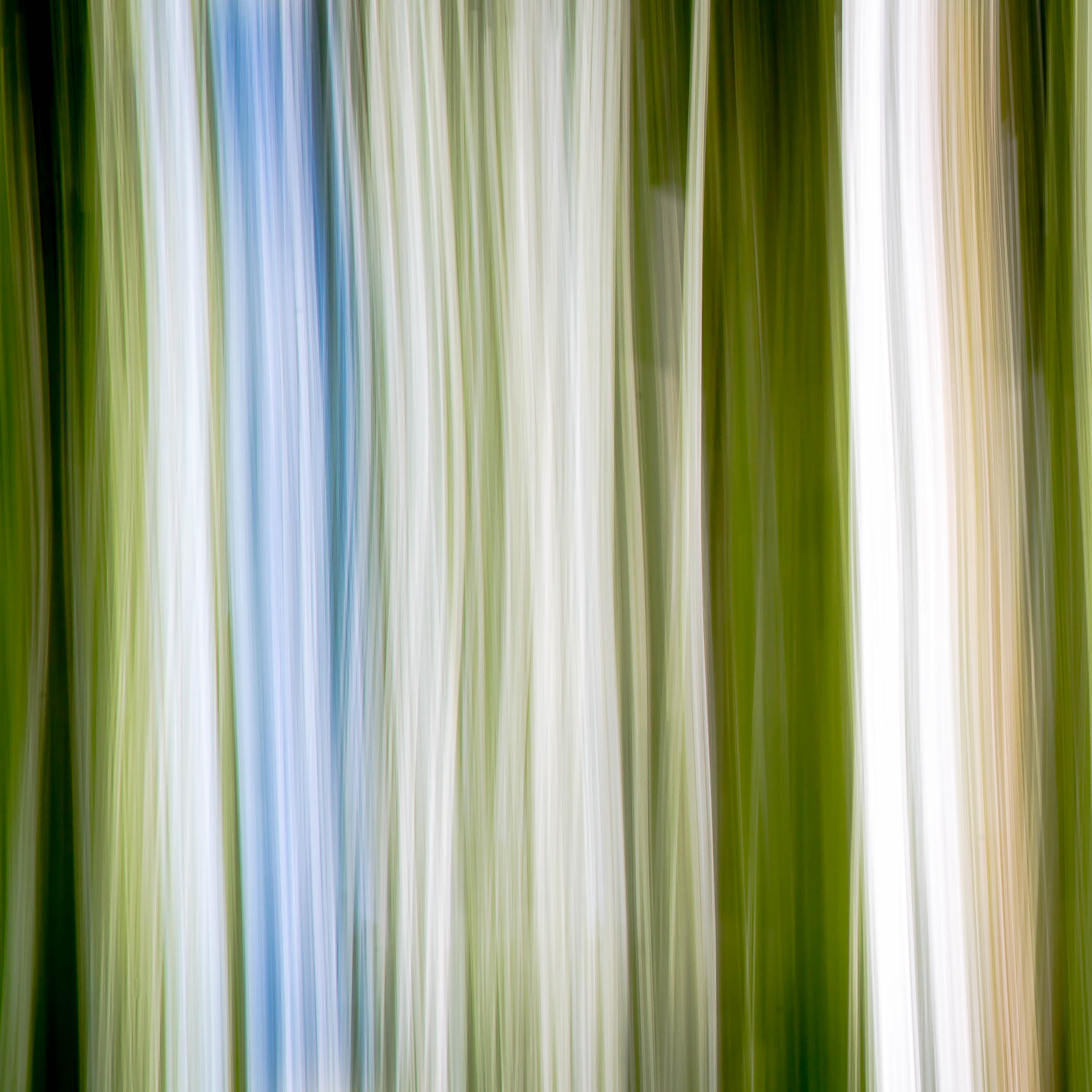 _MGL1083_A Stripe of Blue.jpg