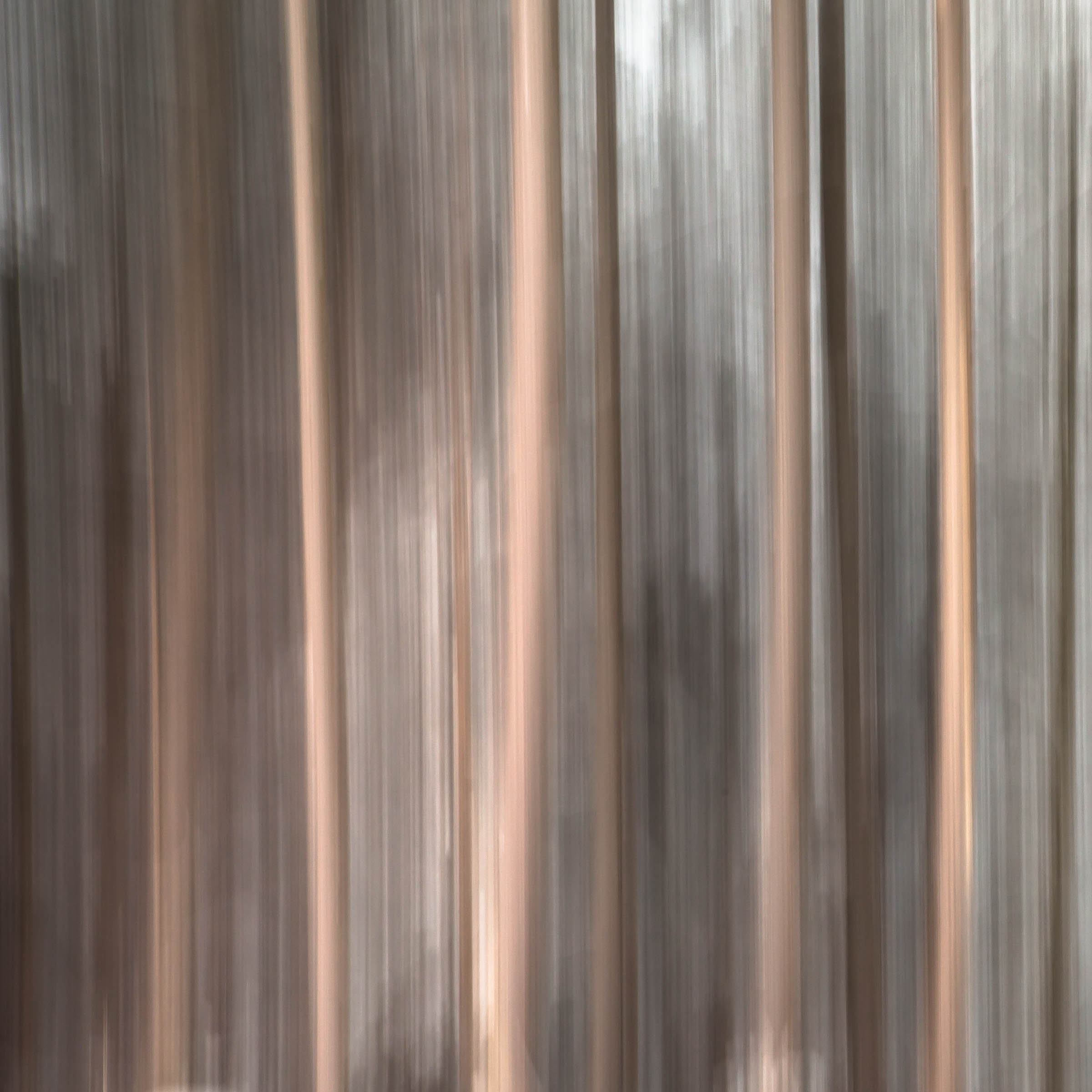 IMGL2496_Deep in the Woods.jpg