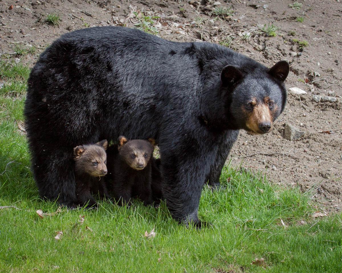 Rankin_Bear Series_01.jpg