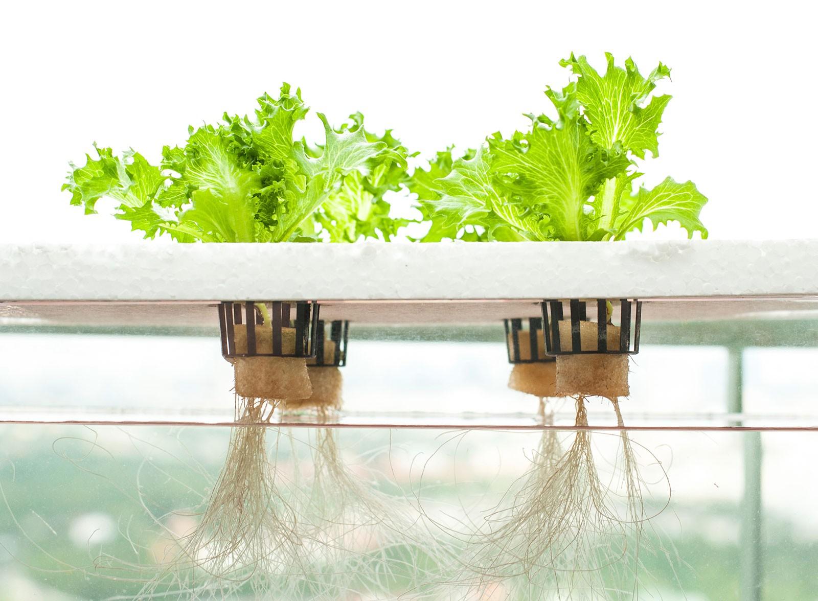 dwc-hydroponics-e1459512409966.jpg