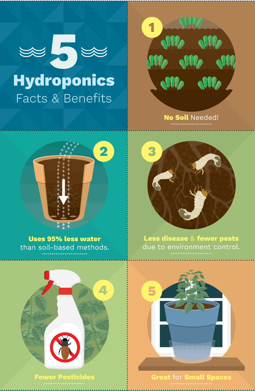 hydroponic-facts-benefits.png