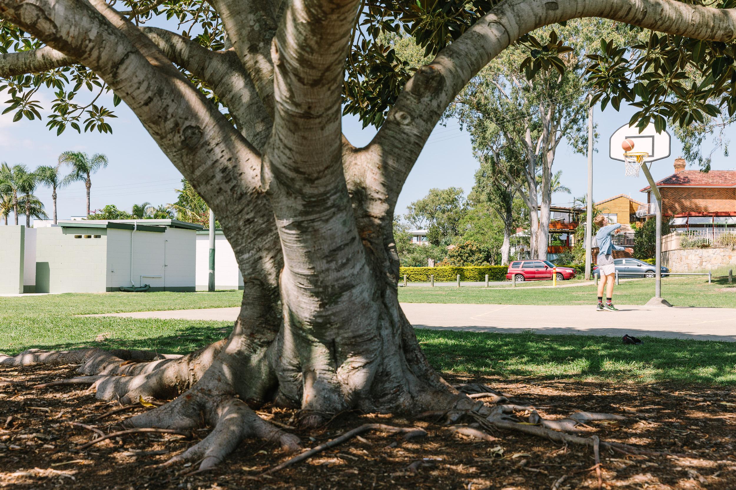 Beth Boyd Park Oak Trees