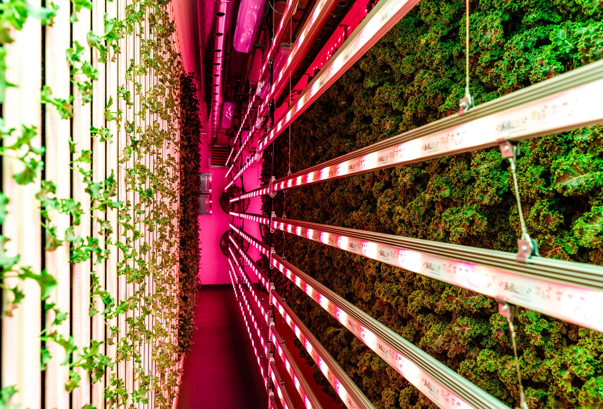 Modular Farms Eat Street Brisbane Launch 2018