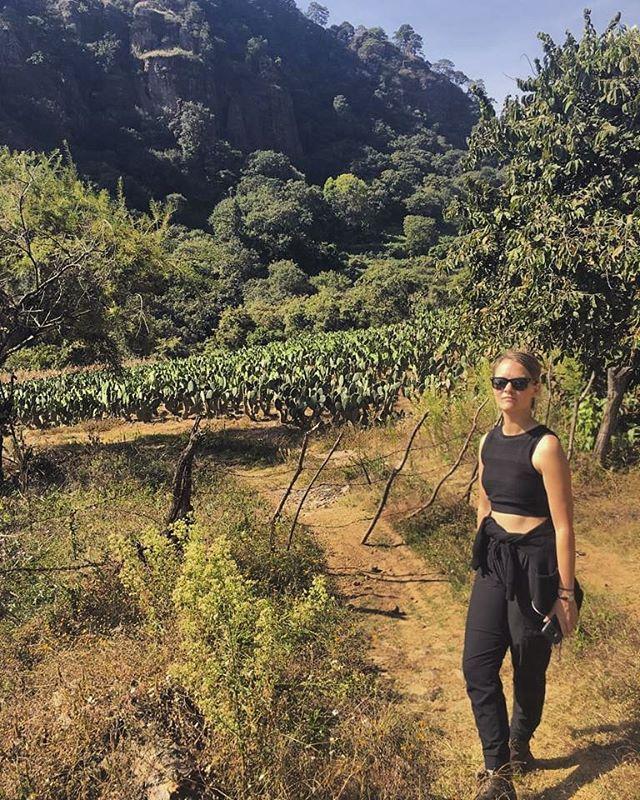 Hiking through nopal cactus farms in the mountains outside of Mexico City. 🌵☀️🏵 . . . . . #Morelos #tlayacapan #Nopales #Cactus