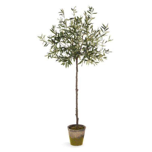 Olive+Tree+in+Pot.jpg