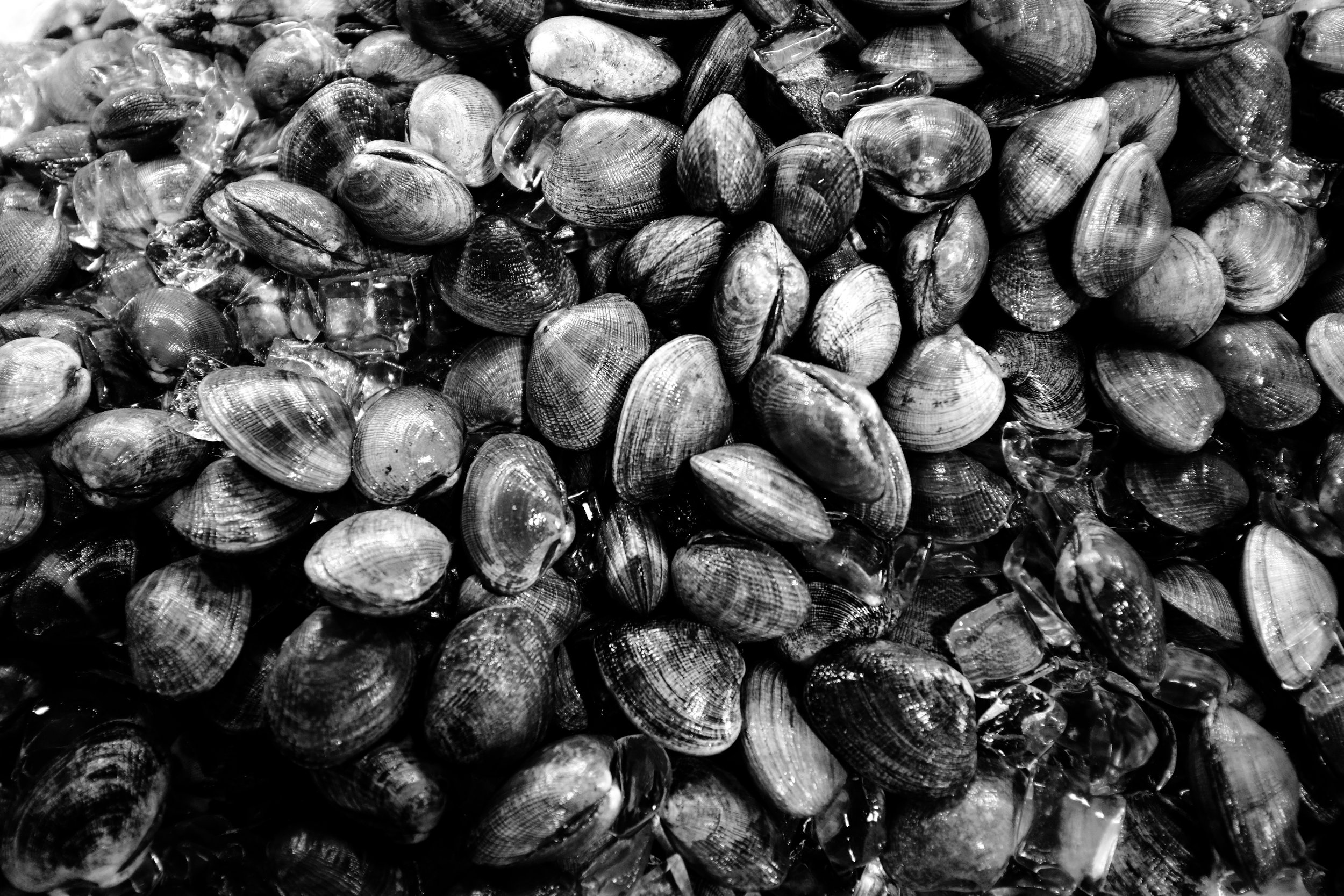 Mussels at the Chinatown market