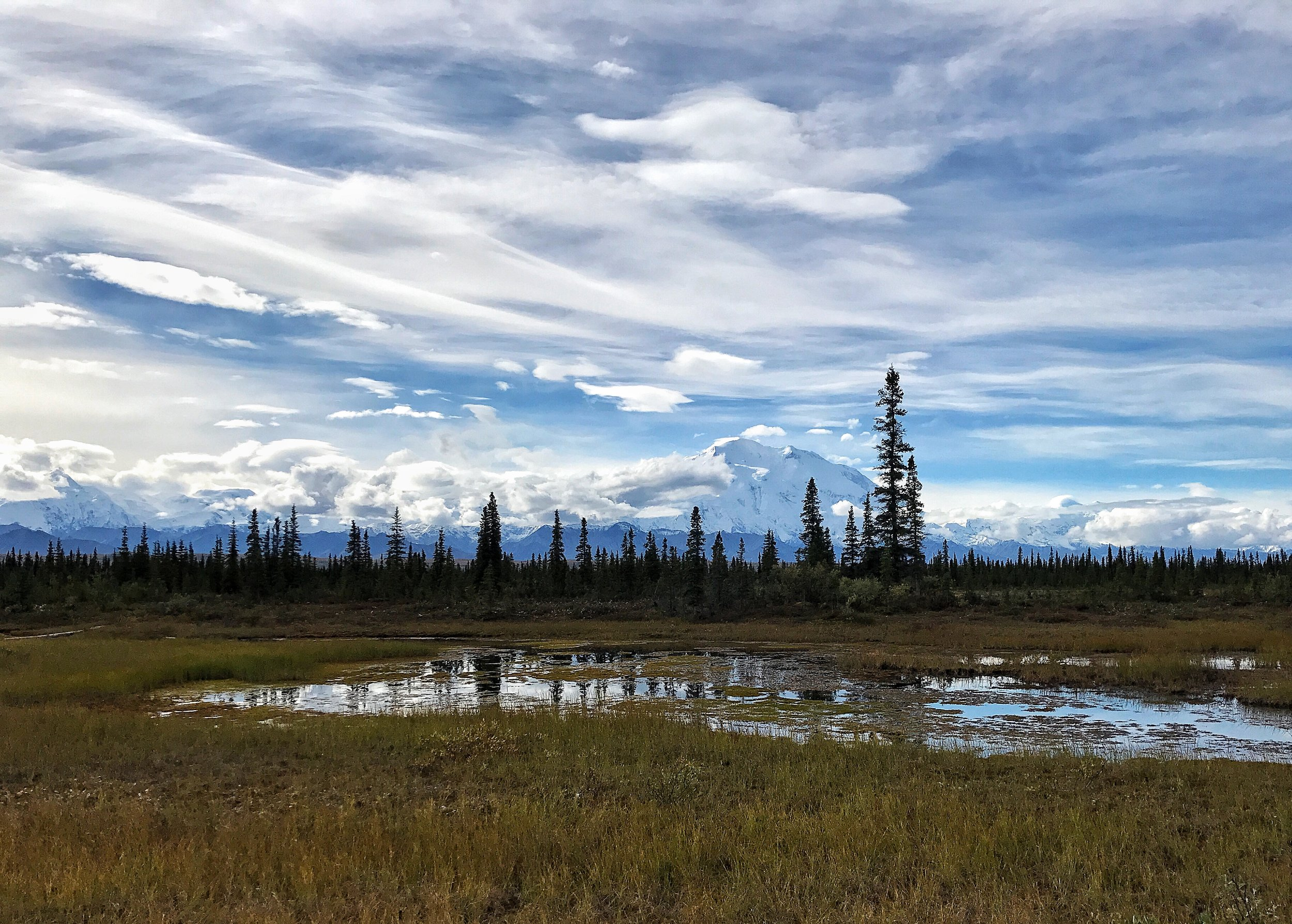 Denali from McKinley Bar Trail by Lee Amick