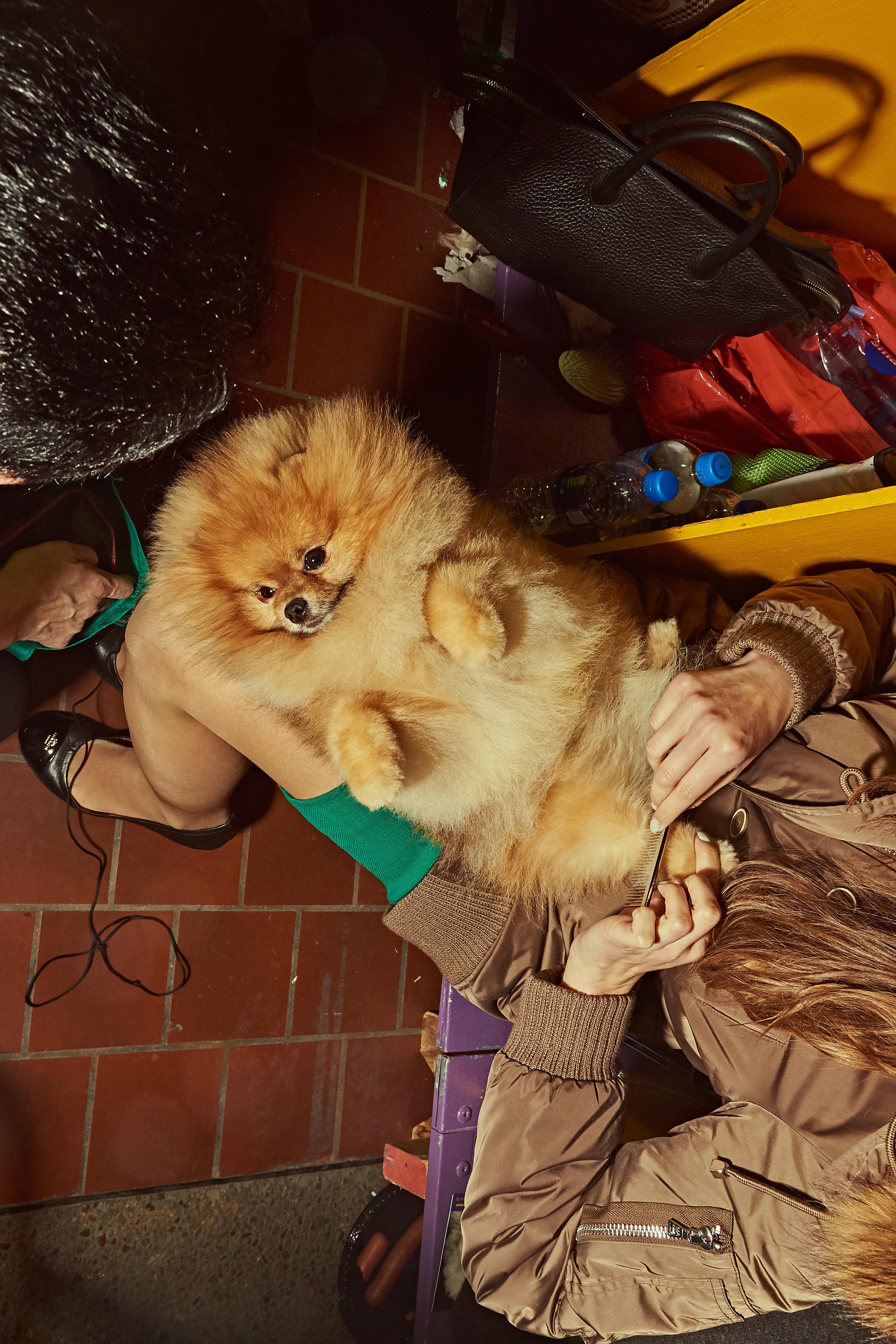 dogshow19_day3 21.jpg