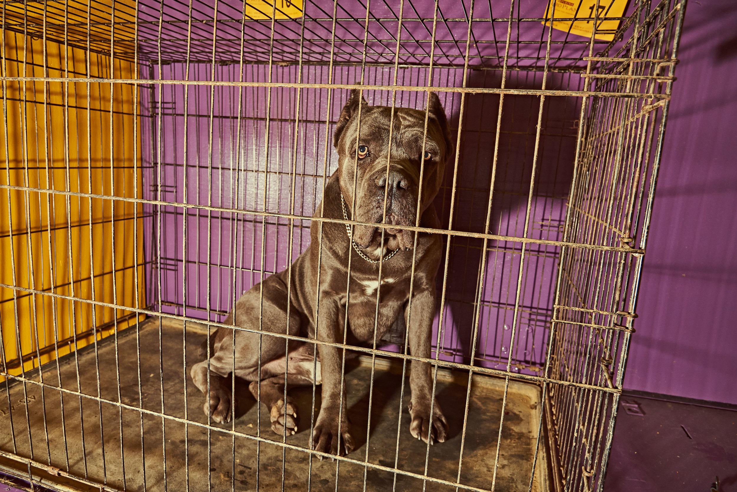 dogshow19_day3 23.jpg