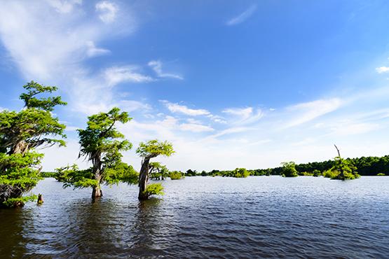 Dead Lakes Gulf County Florida - Global Dish - Stephanie Arsenault