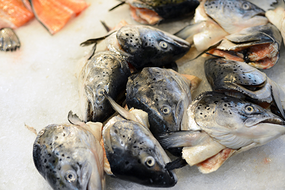 Fish heads for sale in NYC's Chinatown - Global Dish - Stephanie Arsenault