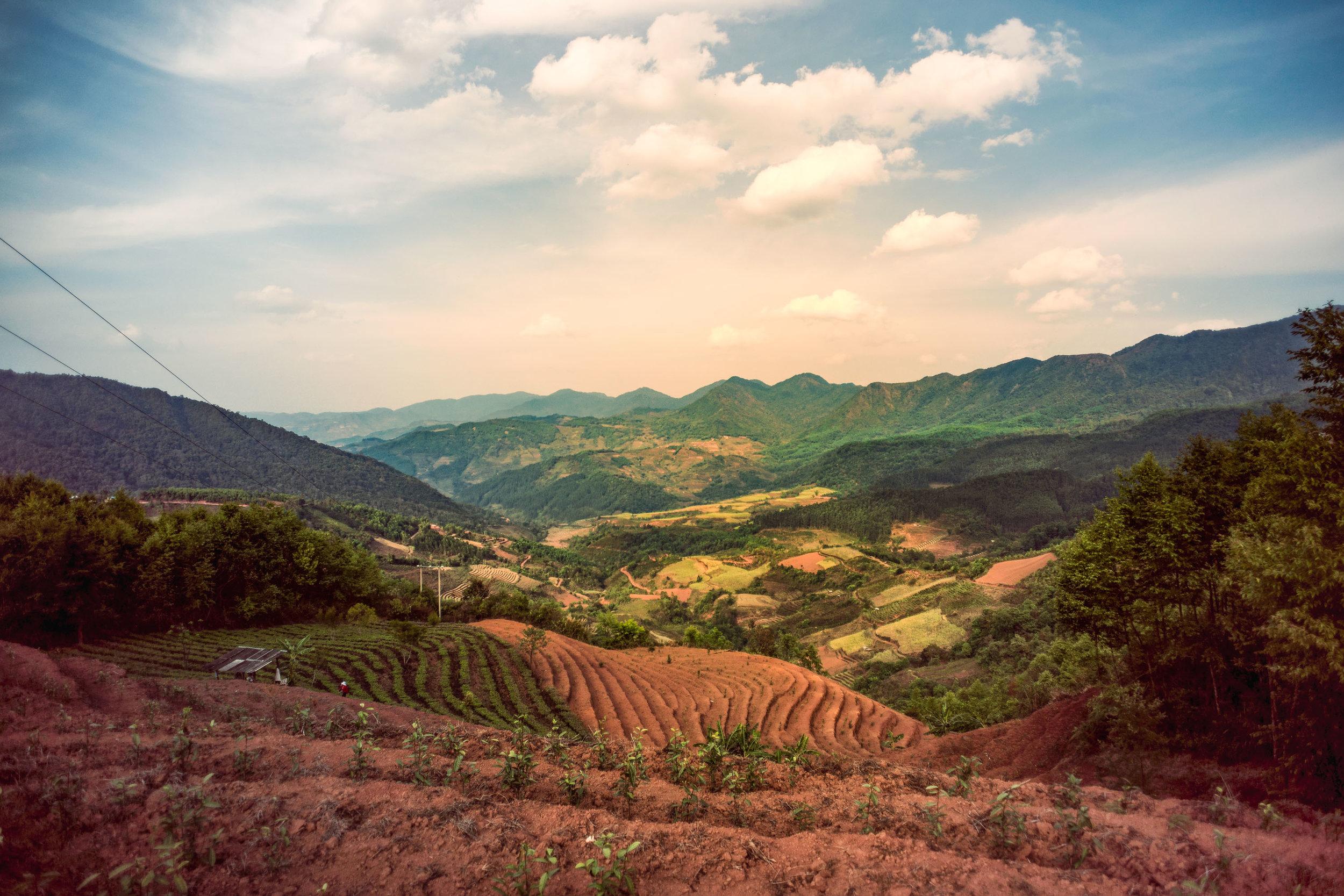 Farm Shots - Web Size - 43 - Fuyan.jpg