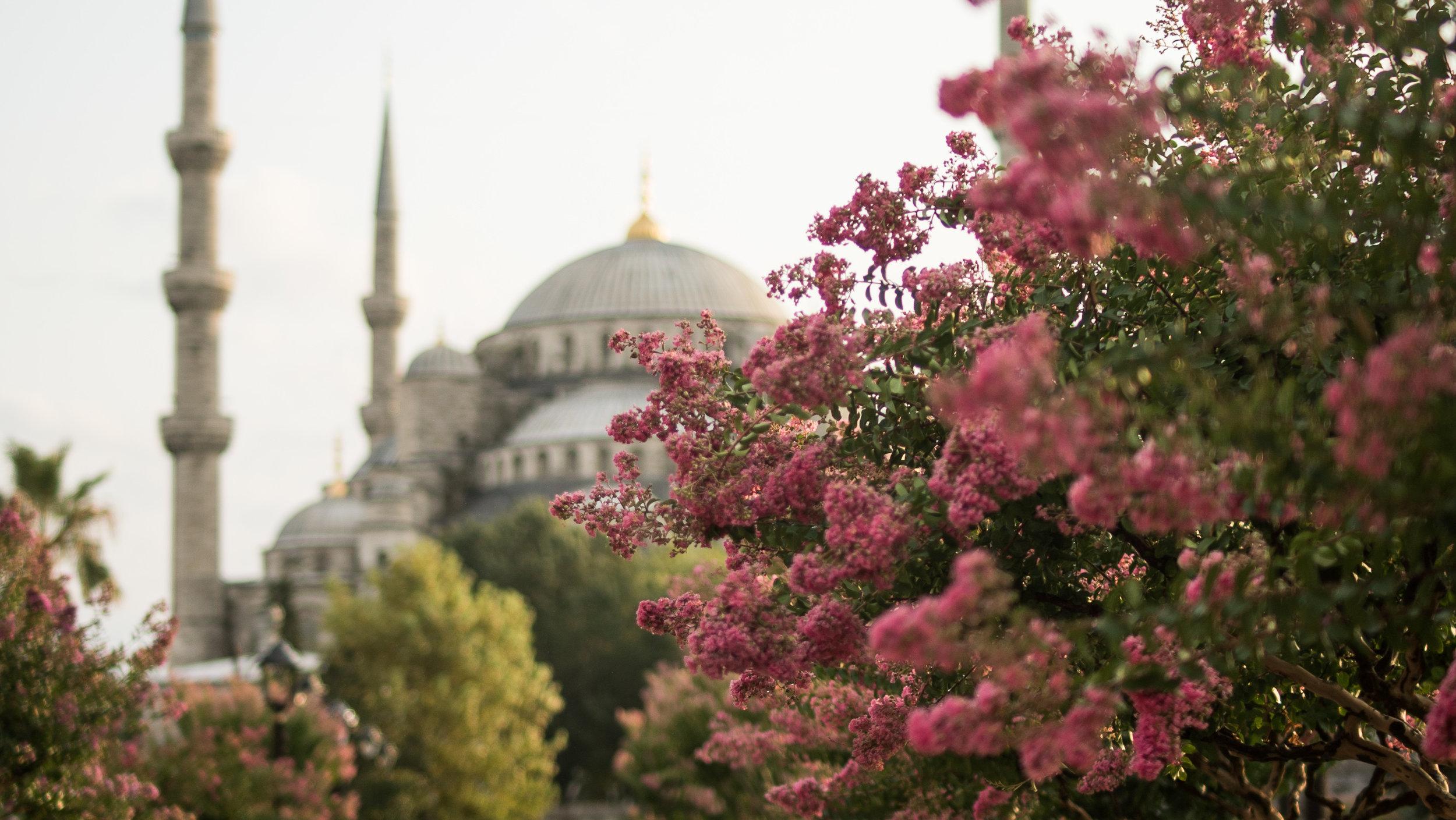 turkey-01789.jpg