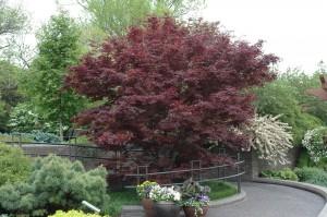 Ornamental Tree Cover.jpg