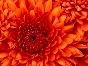 Perennials cover.jpg