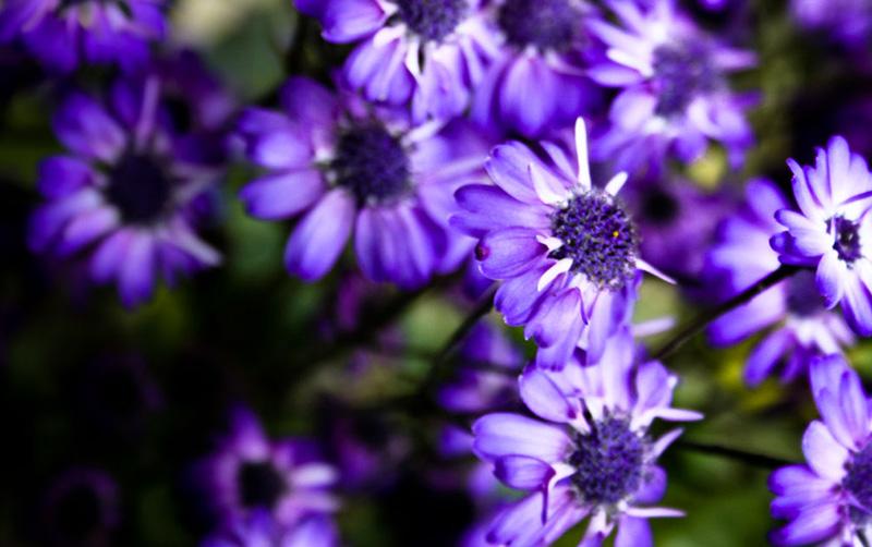Ultraviolet-flowers.jpg