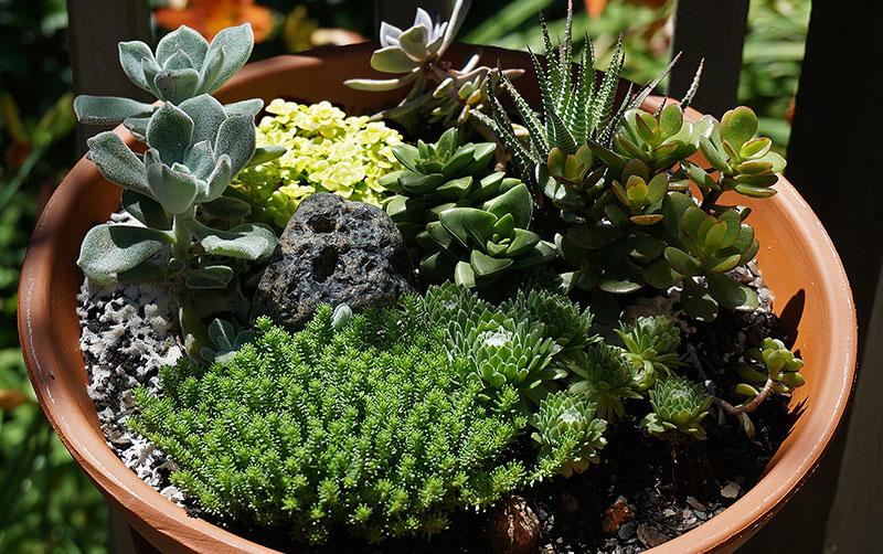 SucculentContainer-Terracotta.jpg