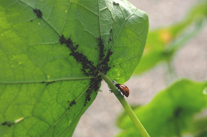 Dammann's-photo-ladybug.jpg