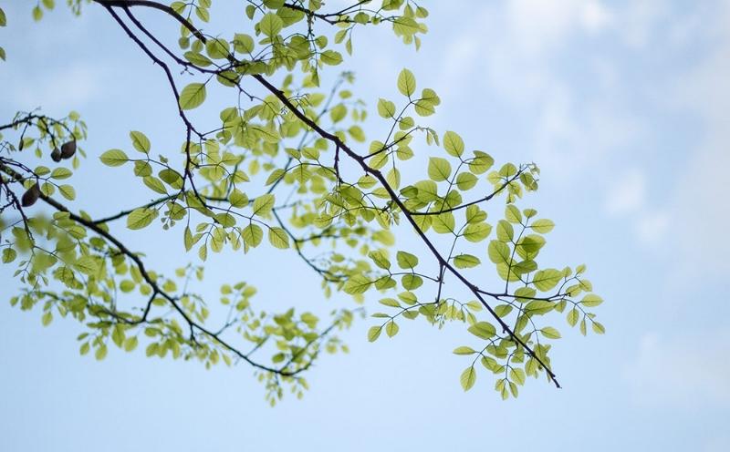 Dammann's-Header-Tree.jpg
