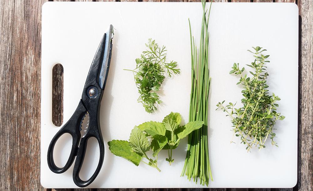 pruning_herbs