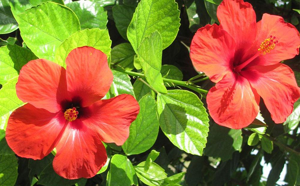 Petunias, Marigolds, Snapdragons