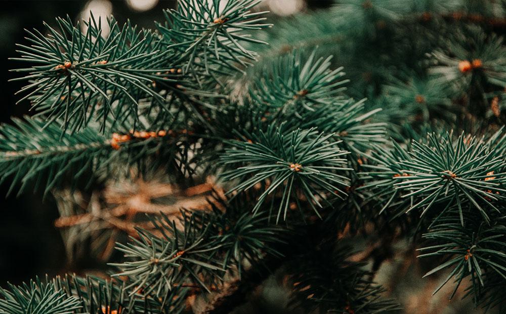 Christmas Tree Pine Needles