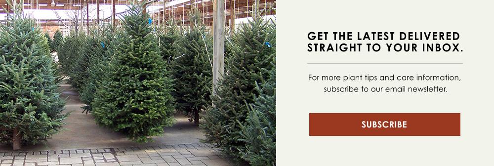 CTA Christmas Trees