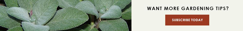 CTA-leafy-greens