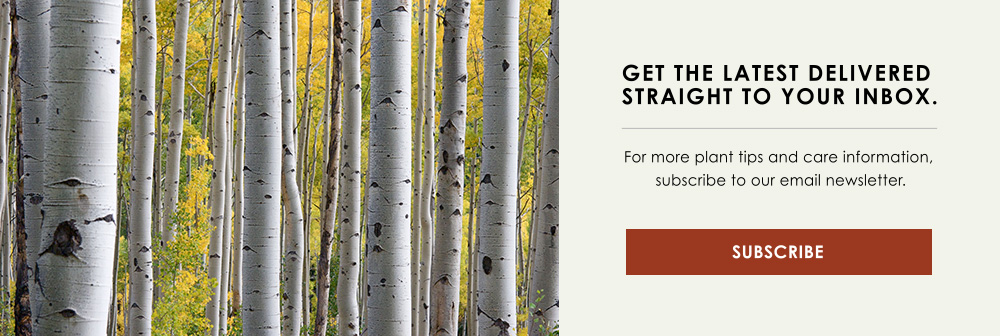 InBlog-CTA-Trees