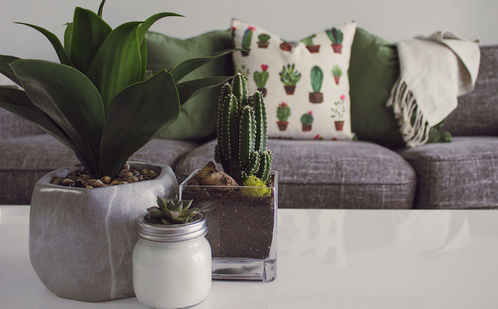 diverse set of succulent and cactus plants on coffee table
