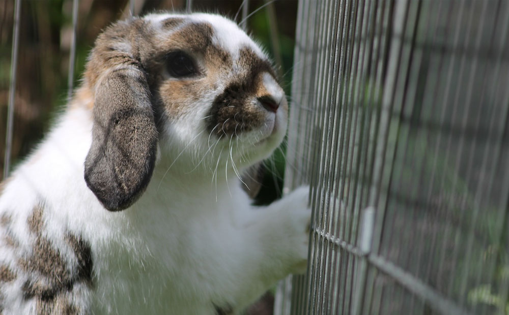 how to keep rabbits out