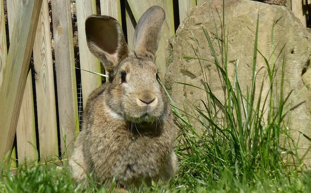 keeping rabbits out
